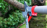 Tree Pruning Services in Richmond VA