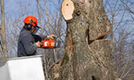Tree Removal in Richmond VA